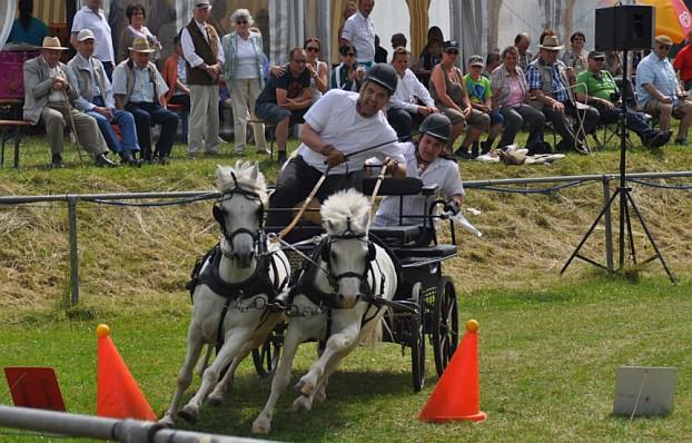Der Sieger in der Ponyklasse Zweispänner Hans-Wilhelm Moser vom RFV Sontheim in Schräglage zwischen den Hinderniskegeln